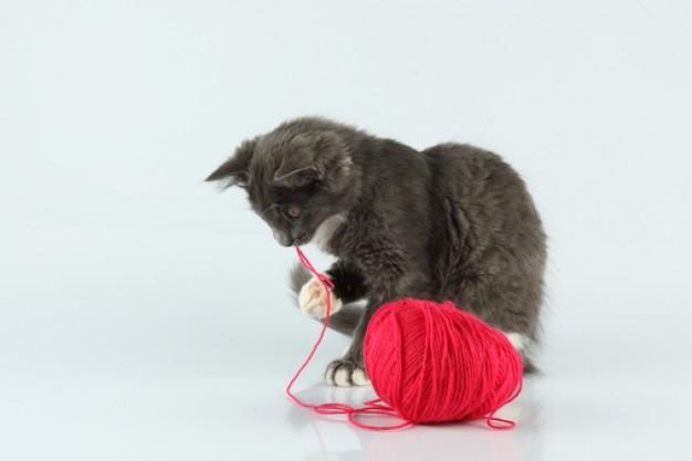 threads--friend--grey-cat--thread_3218279